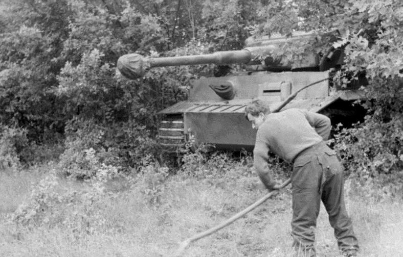 Tiger in an ambush position, Russia