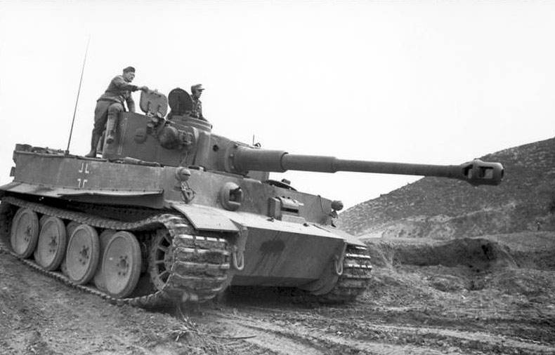 tiger in tunisia